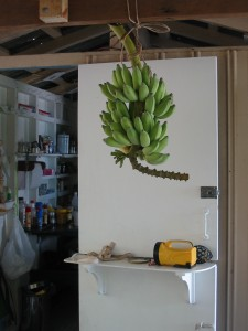 bananas in bunch outside kitchen
