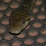 python close-up