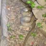 python at Portland Roads
